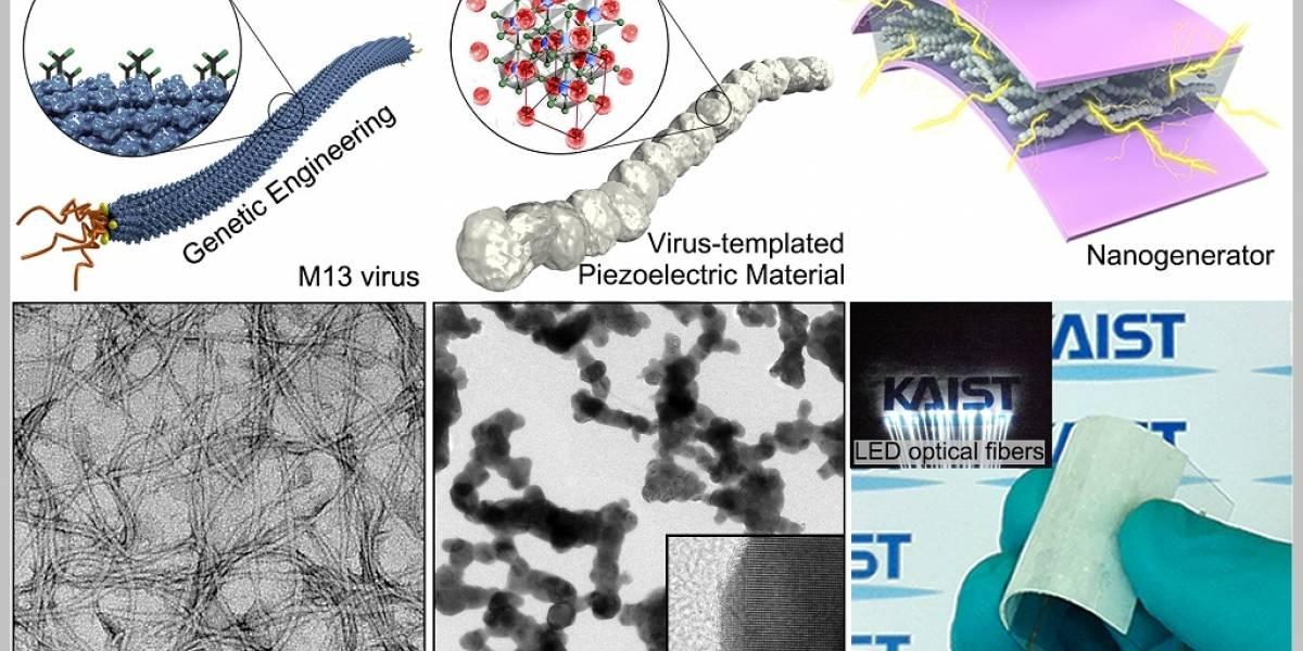Construyen nanogeneradores con ayuda de virus sintético