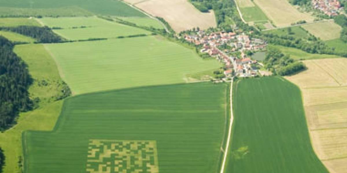 ¡Imágenes en campos de trigo!