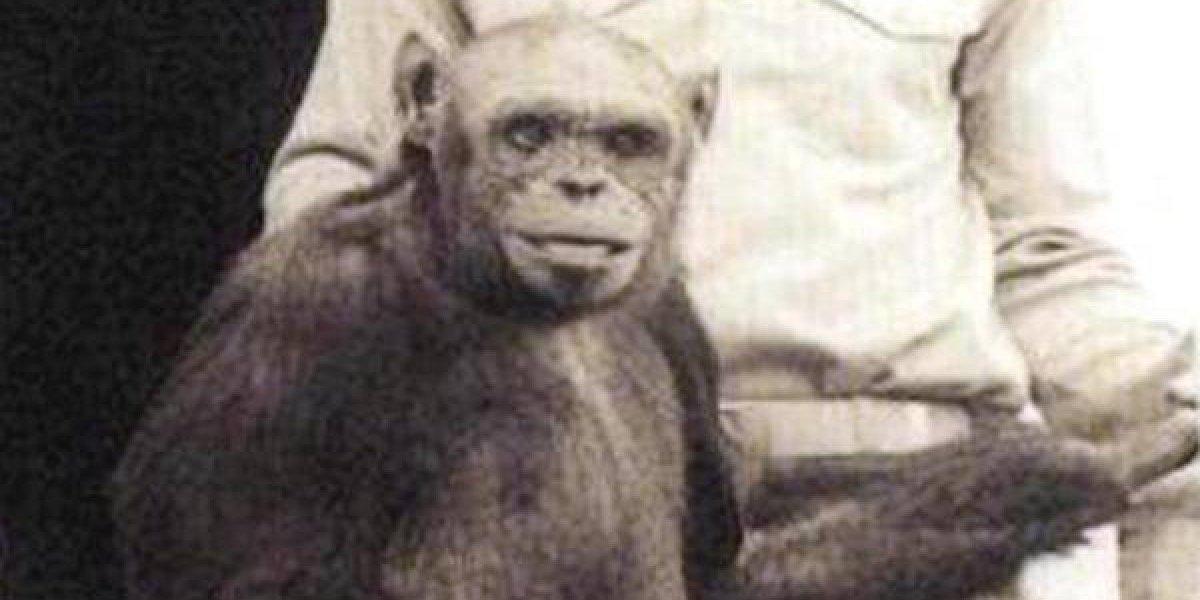 Híbrido humano y chimpancé habría nacido en un laboratorio de EE.UU.