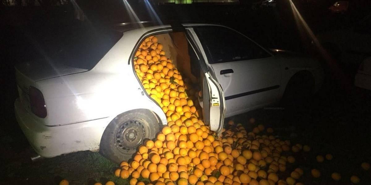 """5 detenidos por robar cuatro mil kilos de naranjas """"para uso personal"""""""