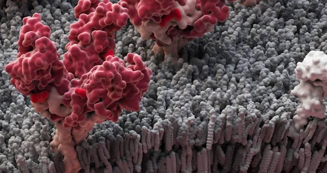 Coronavirus: estos son los 4 tratamientos que la OMS evalúa para combatir la enfermedad