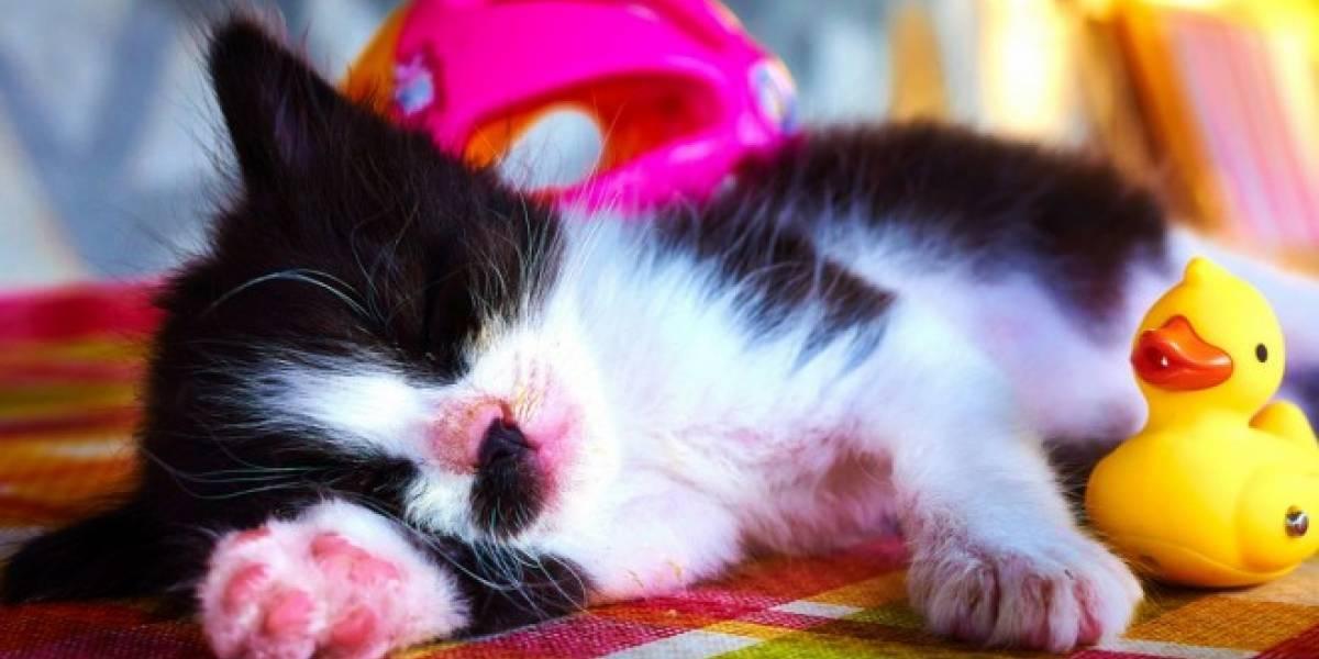 Investigadores encuentran gen culpable de que algunos necesiten dormir más que otros