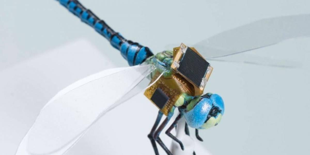 Científicos alteran genéticamente a libélulas para convertirlas en drones