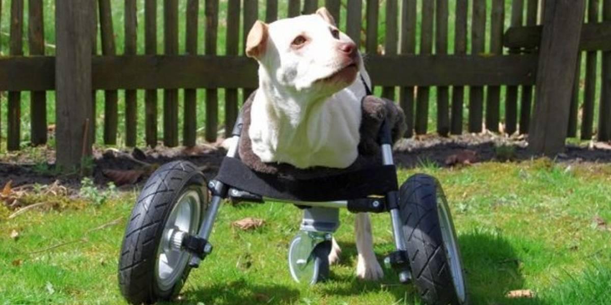 Multec crea unas ruedas para perro de código abierto impresas en 3D