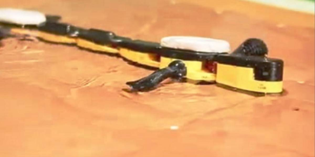 Crean salamandra robot que camina en tierra y nada en agua