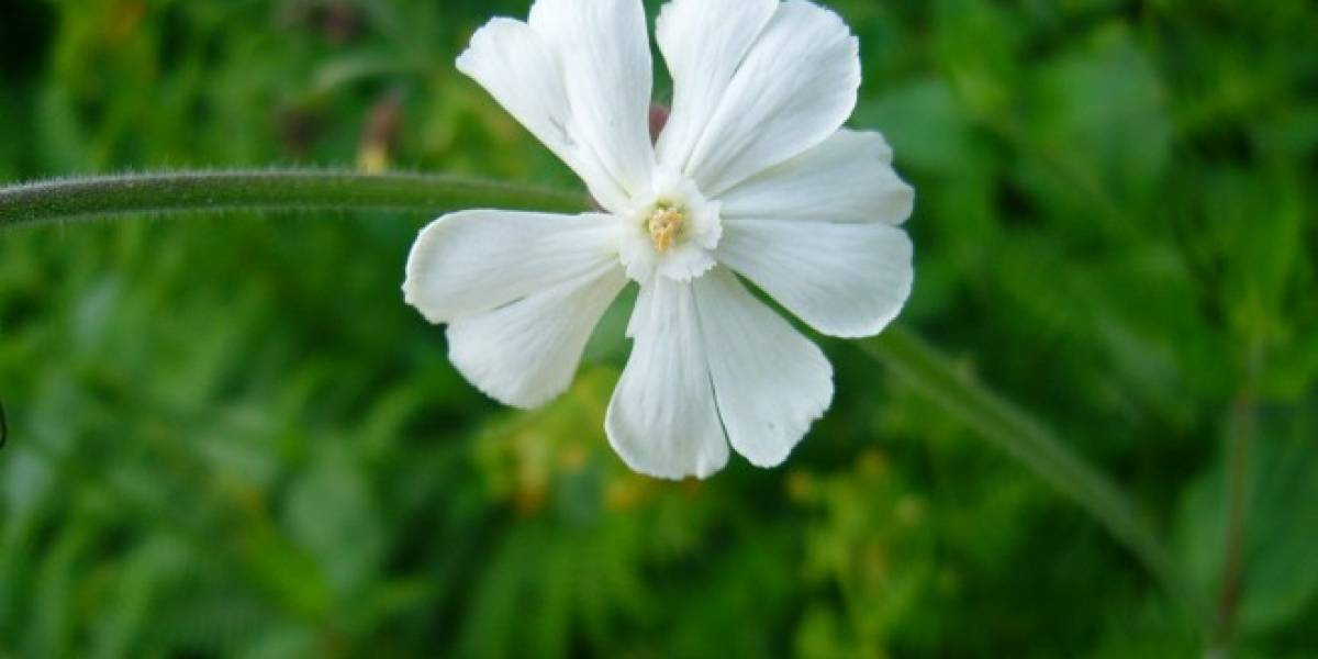 Gracias a una ardilla semillas viajan en el tiempo para mostrarnos la flor de la Era del Hielo