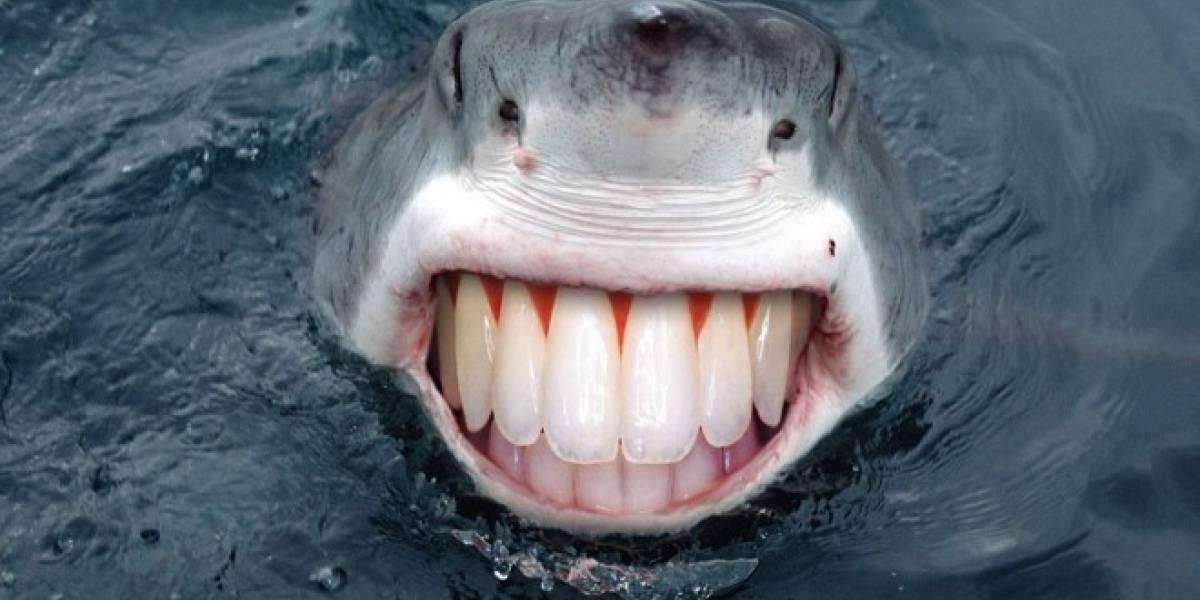 Desarrollan boya inteligente para prevenir ataques de tiburón