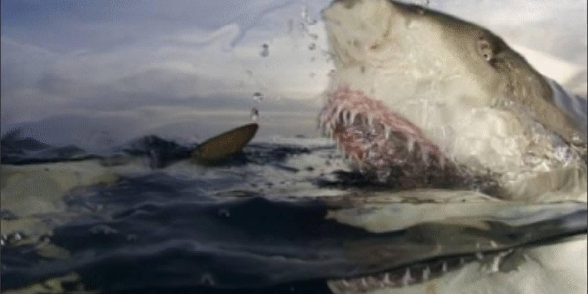 La semana del tiburón: Tecnologías bio-inspiradas en los tiburones