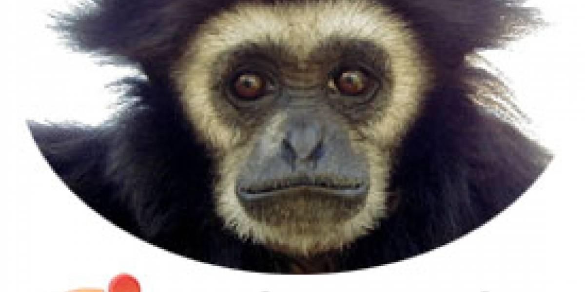 Qué se viene en Ubuntu 7.10: Gutsy Gibbon