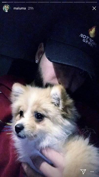 maluma-encuentra-a-su-perro