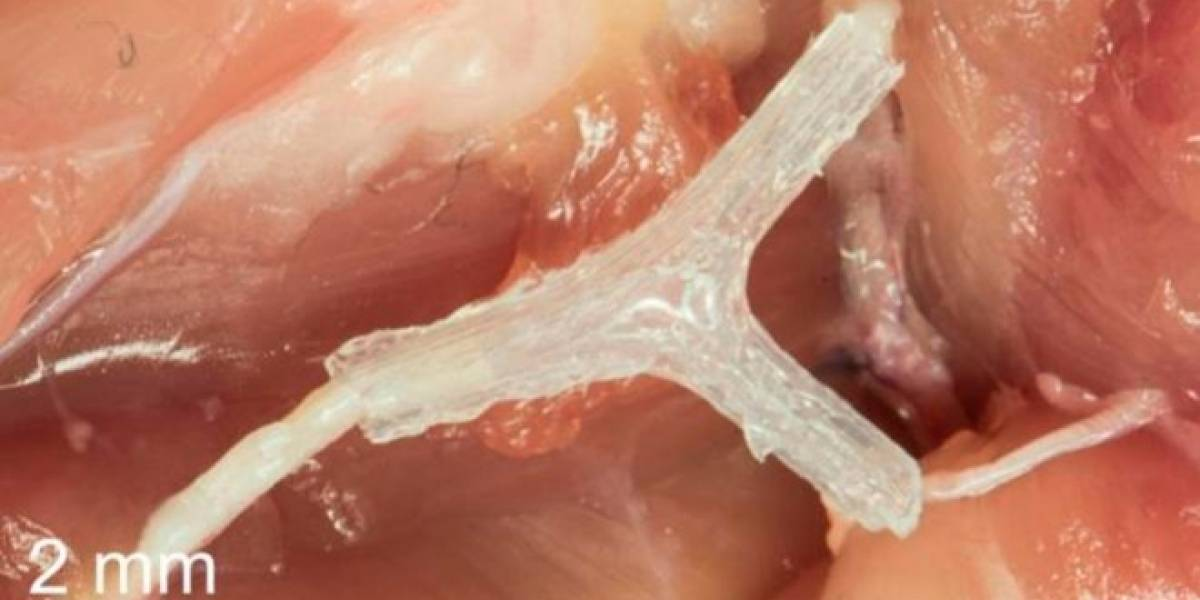 Esta guía milimétrica impresa en 3D ayuda a reconectar tejidos nerviosos