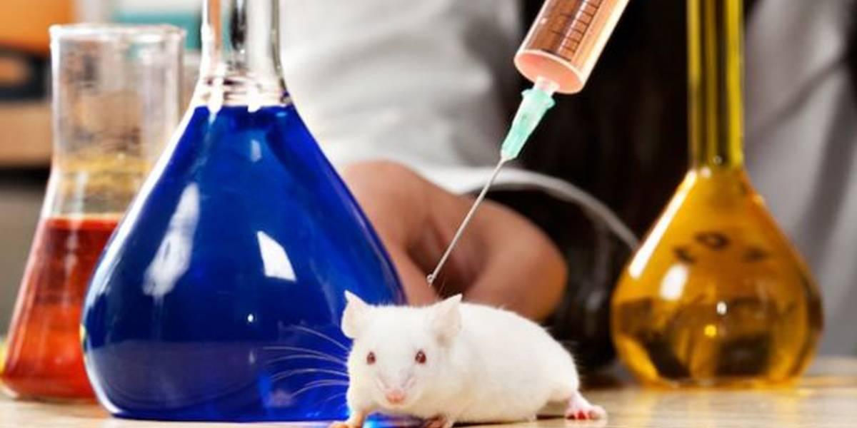 Esperanza contra cáncer: científicos eliminan tumores de ratones
