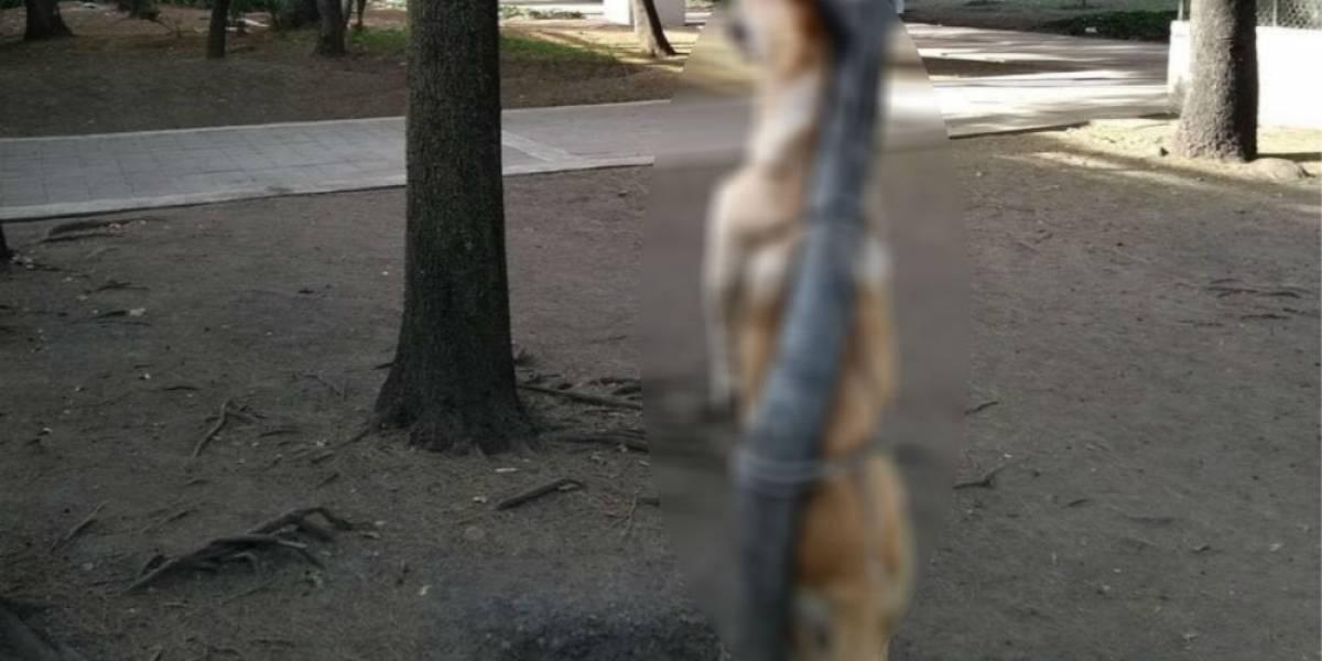 Matan y cuelgan en árbol a perro en Iztacalco