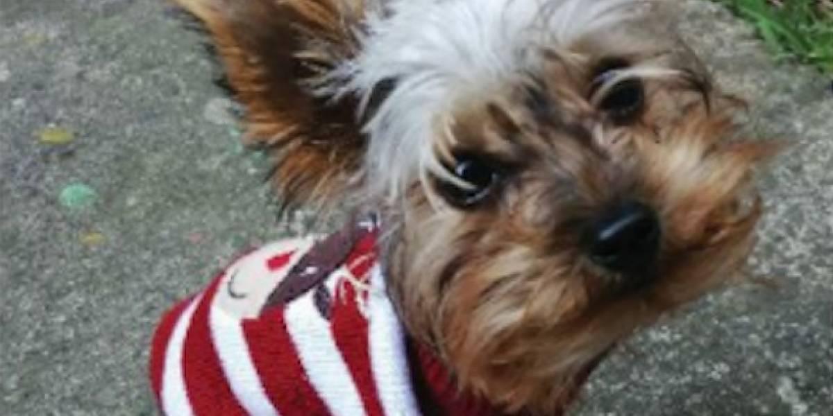 Salió a pasear a su mascota y al negarse a asalto le robaron al perro