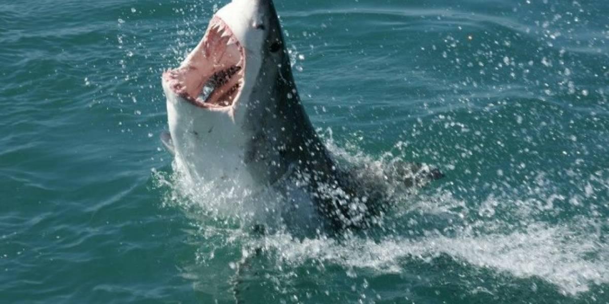 Universitarios construyen motosierras con dientes de tiburón