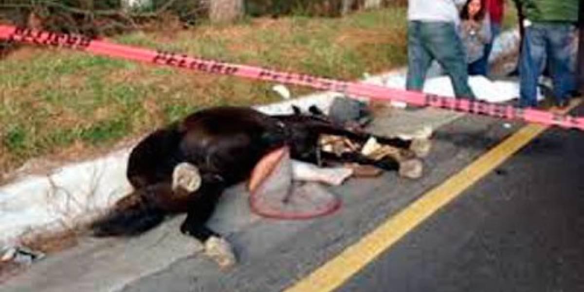 ¡Absurdo! Motociclista pereció al chocar en la vía con un caballo muerto