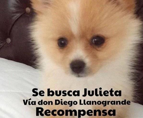 Se busca a Julieta Maluma