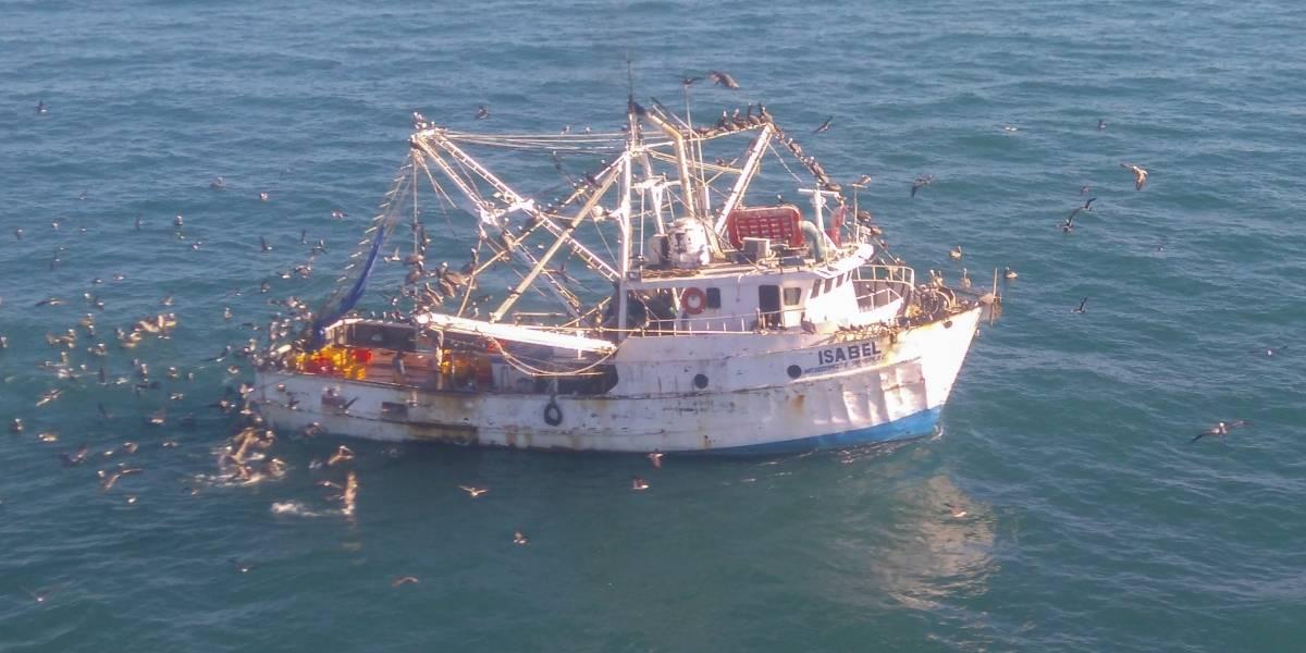 Se incrementa 300% buques ilegales en área de vaquita marina