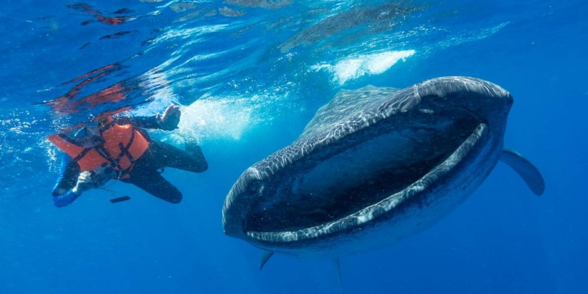 Os gigantes do mar ameaçados pelo aumento da poluição por plástico