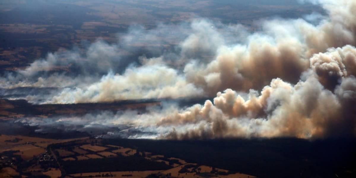 Ercilla sigue ardiendo: 11 incendios forestales aún se mantienen activos en el sur del país