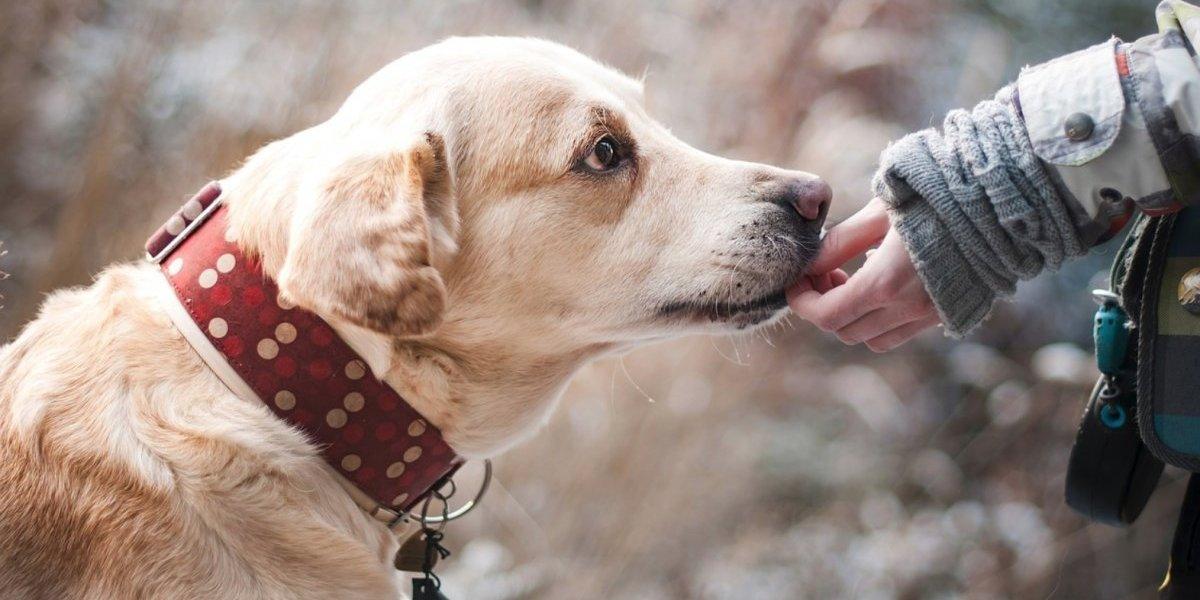 ¿Adoptarás una mascota? Checa estas recomendaciones antes de hacerlo