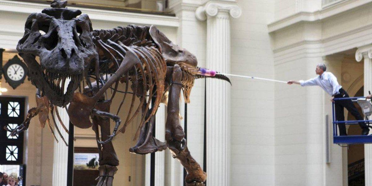 Se muda Sue, el esqueleto de tiranosaurio más grande