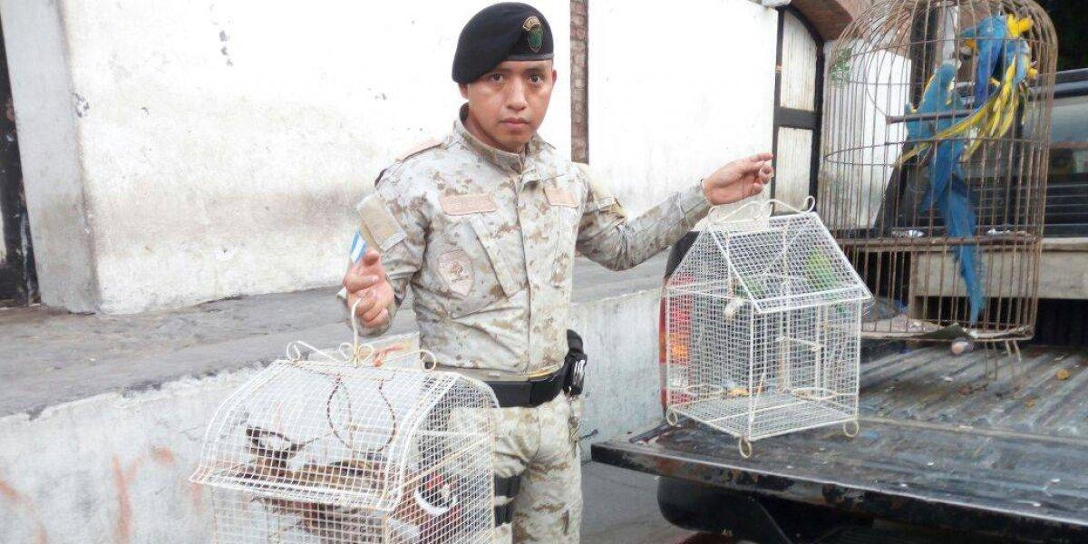 Rescatan a aves en peligro de extinción de un domicilio en Escuintla