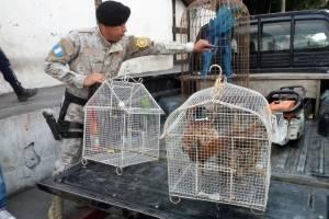aves rescatadas en Escuintla