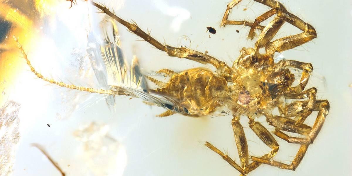Aranha com cauda encontrada por cientistas ganha nome de 'Quimera'