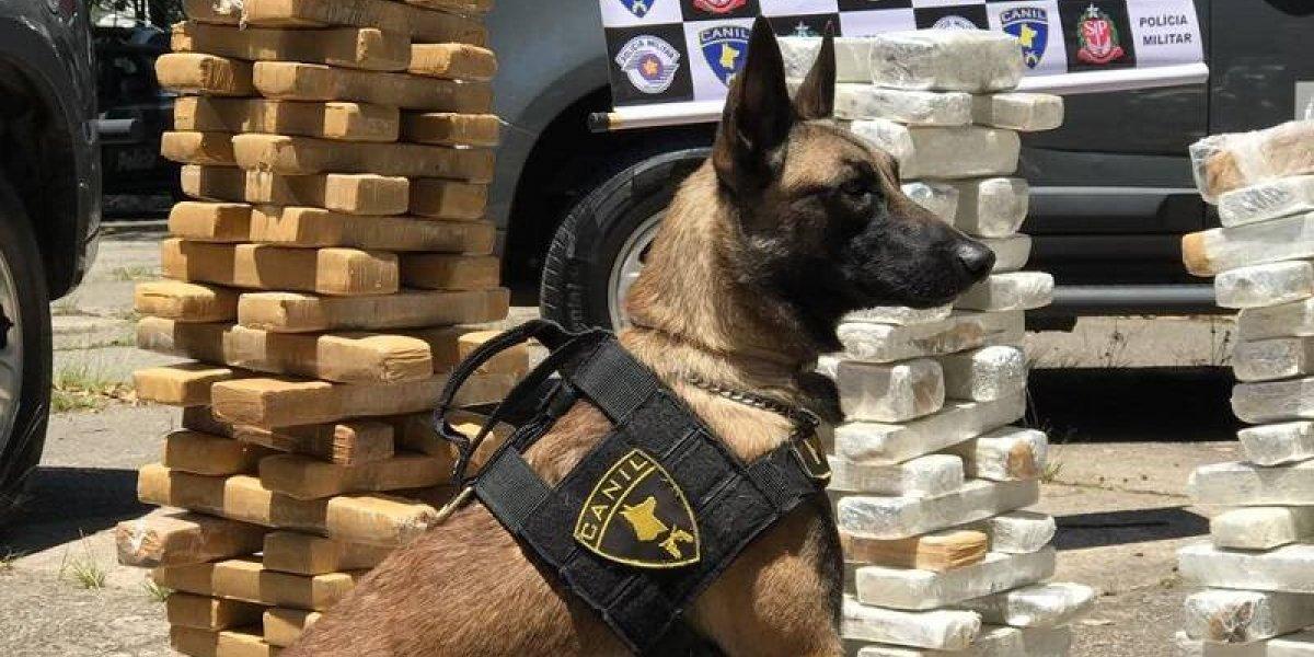 Cães ajudam policiais a encontrar mais de 200 tijolos de maconha na zona oeste