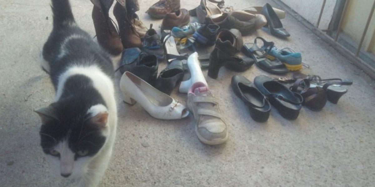 """""""Lo chistoso es que traen uno solo"""": gatitos callejeros de Calama """"roban"""" zapatos para agradecer al hombre que los alimenta"""