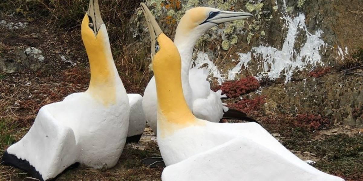 """Fallece el """"pájaro más solitario del mundo"""", que estaba """"enamorado"""" de una estatua de ave"""