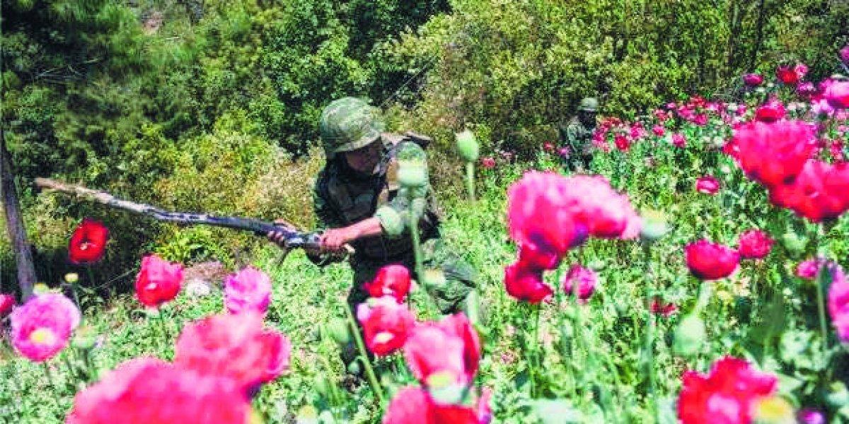 Jalisco, el nuevo paraíso para producir amapolas
