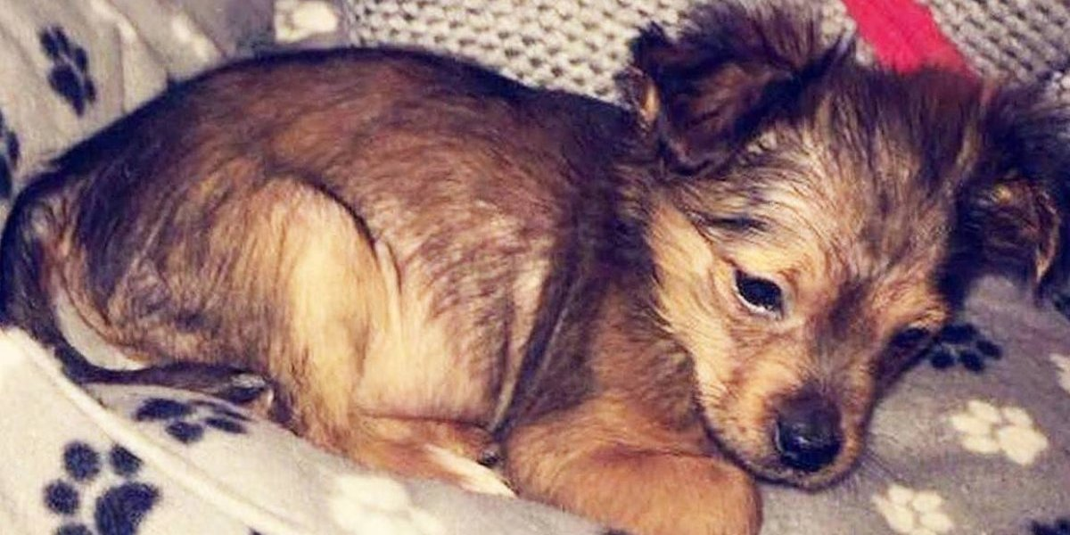 Matan a martillazos a cachorro, lo meten a un microondas y lo publican en redes