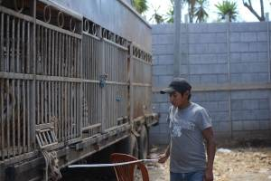 tigrescircoponcejocotillo22-b995ce4a2e3708ec1ca6fe3e3380227d.jpg