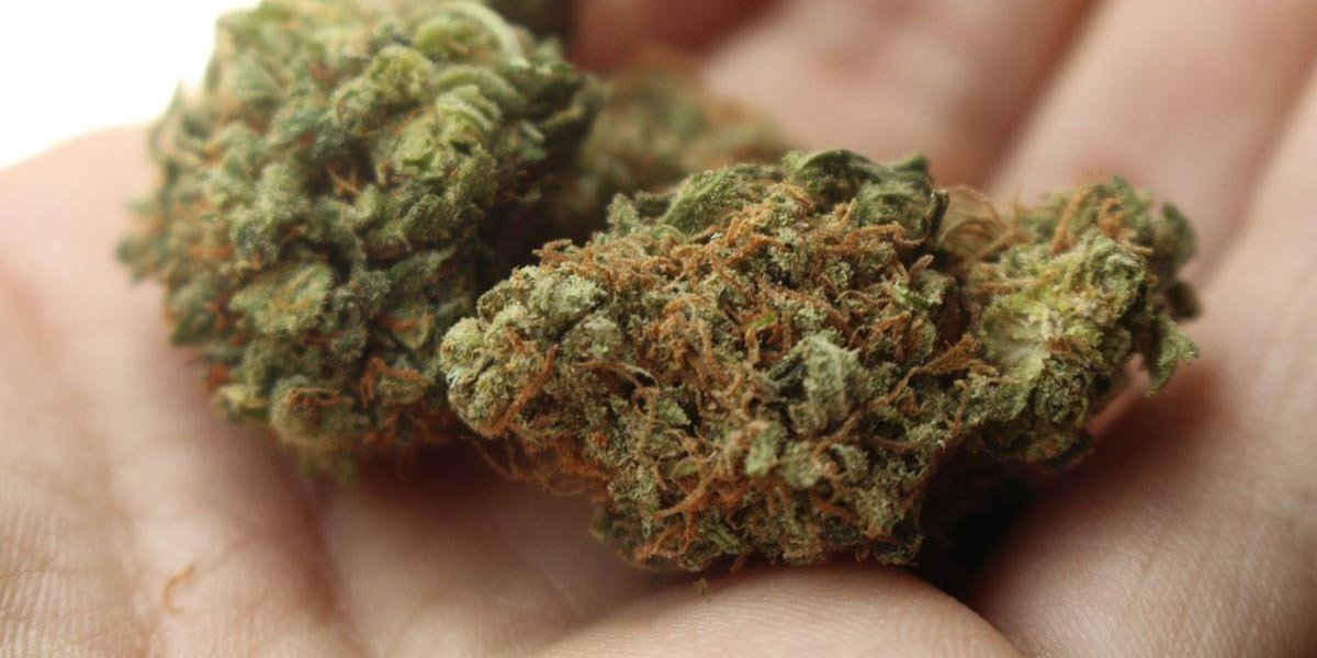 ISP busca evitar que usuarios de cannabis medicinal consuman productos artesanales de dudosa procedencia