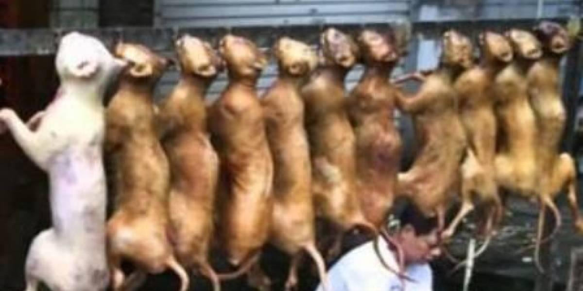 Autoridades no consiguen apartar la carne de perro de restaurantes de Pyeongchang