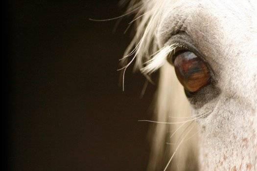 horse525x350.jpg