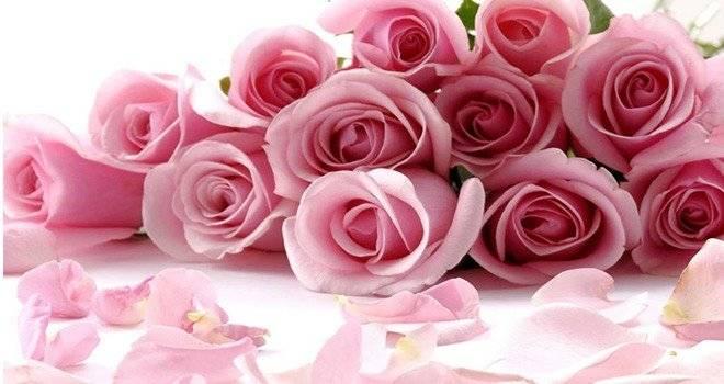 rosas1660x650.jpg