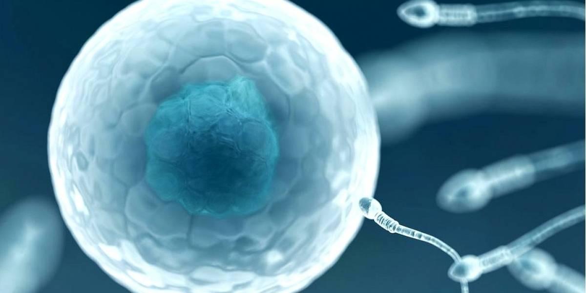 Desarrollan con éxito un óvulo humano en el laboratorio