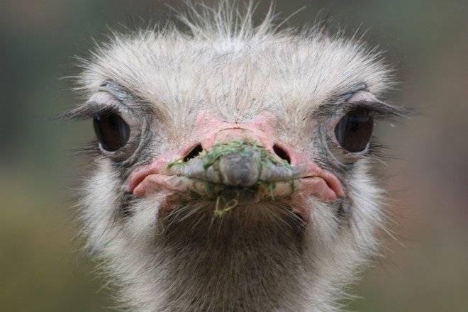 avestruz660x650.jpg