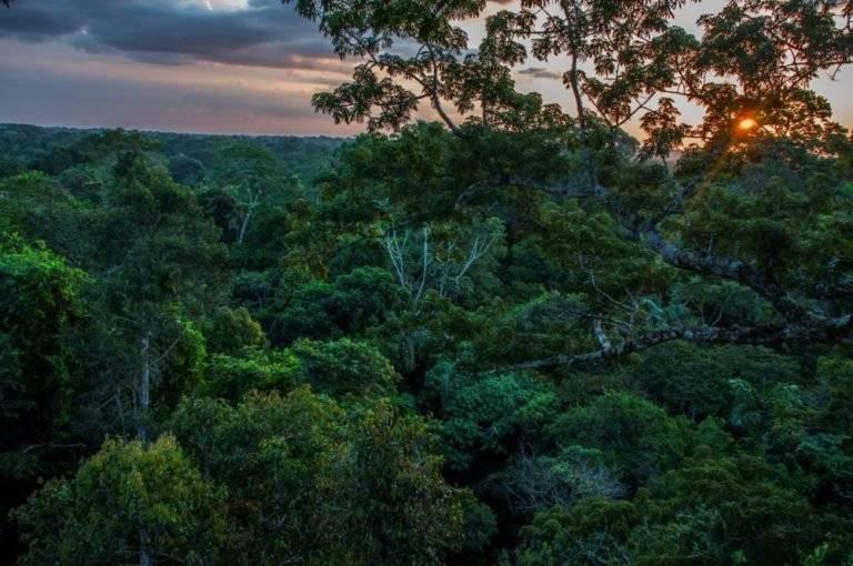 Bosque del Parque Nacional Yasuní. Este lugar megadiverso en fauna y flora está ubicado en Pastaza y Orellana.