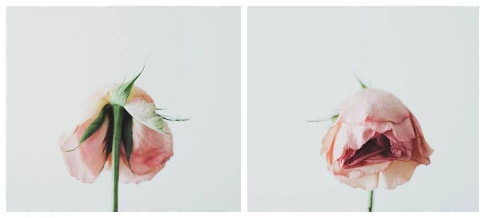 rosetumblr.jpg