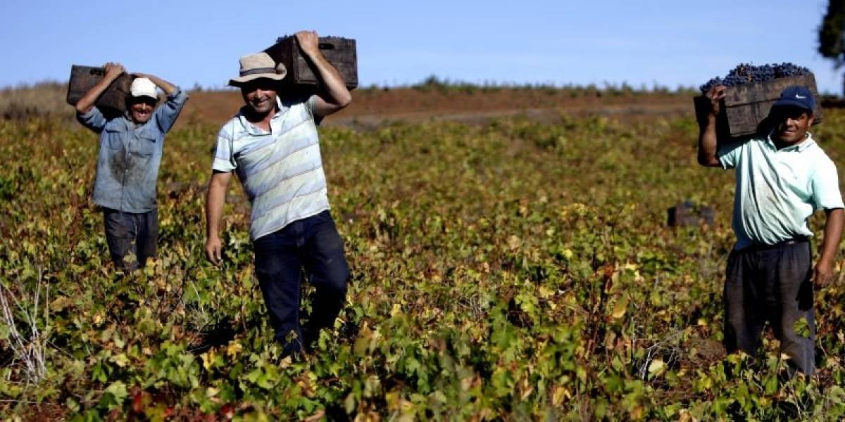 Viñas australes se reúnen en la primera fiesta del vino en Villarrica