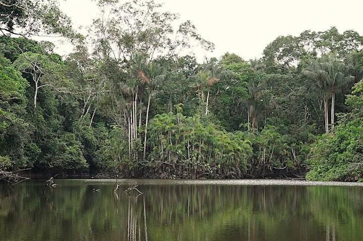Paisaje de una laguna al interior del Yasuní.