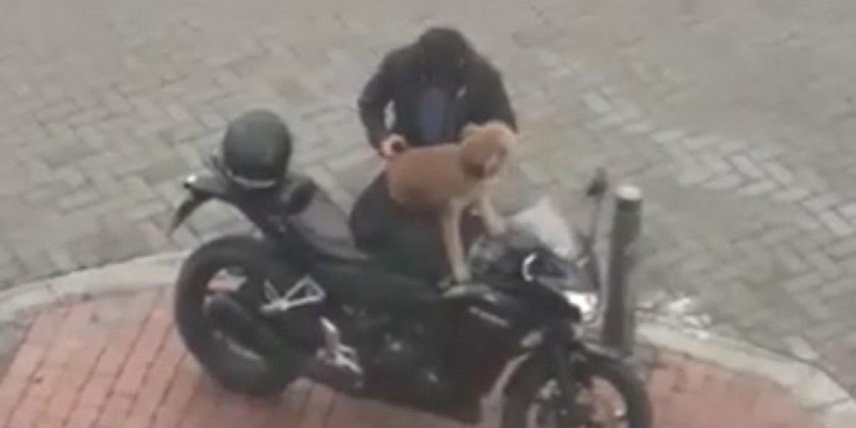 El especial cuidado de motociclista a su perrito que enternece Internet