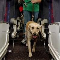Animales de apoyo emocional ya no deberán ser reconocidos como de servicio por aerolíneas