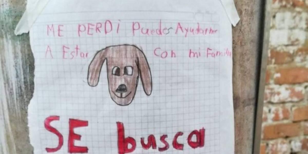¡Se busca! Este es el tierno retrato de un niño en Kennedy que quiere encontrar a su perro