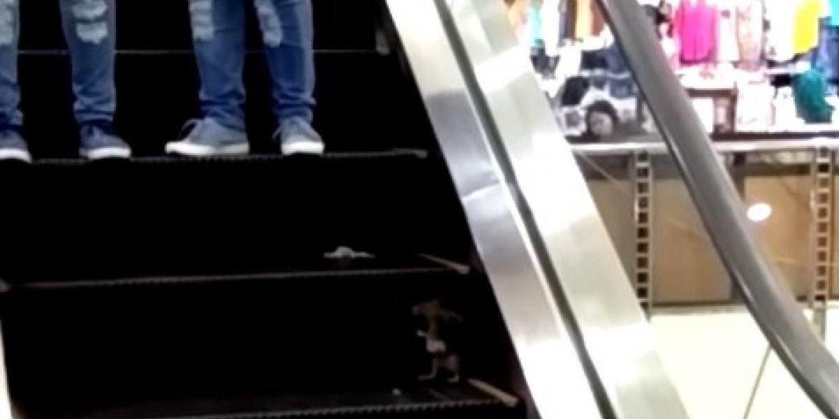 """Desagradable sorpresa: rata se adueñó de escalera mecánica y """"atacó"""" a los compradores de centro comercial en Filipinas"""