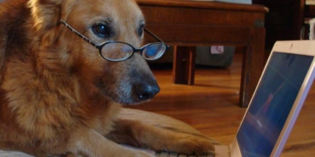 China crea alternativa al juego Cryptokitties, pero con perros virtuales